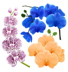 orchid flowers realistic colorful collection vector image vector image