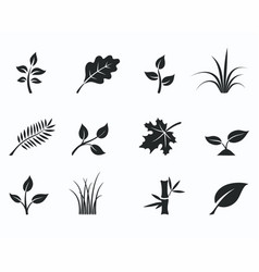 black monochrome floral icon set vector image