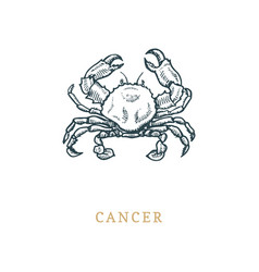 cancer zodiac symbol hand drawn in engraving vector image