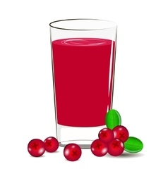 fresh cranberry juice vector image