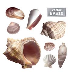 Set of realistic seashells vector