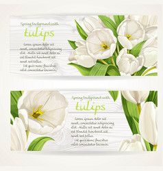 two horizontal banners with white tulips on a vector image