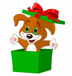puppy box vector image