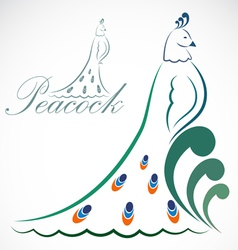 image of an peacock vector image vector image
