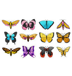 collection colorful butterfly or wild moths vector image