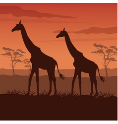 Color sunset scene african landscape with vector