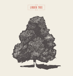 high detail vintage linded tree drawn vector image