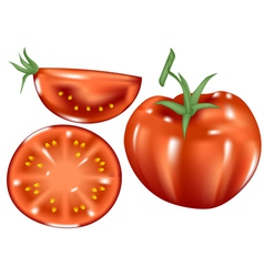 fresh tomatoes vector image