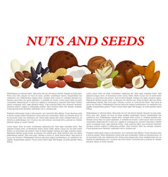 nuts and fruit seeds nutrition poster vector image