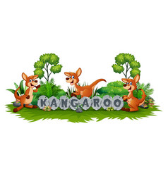 kangaroo playing in the garden vector image
