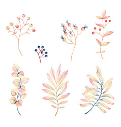watercolor yellow-pink leaves and berries vector image