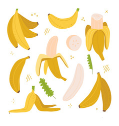 yellow banana colorful set exotic tropical fruit vector image