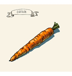 Artistic carrot sketch vector