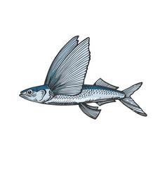 flying fish color sketch engraving vector image