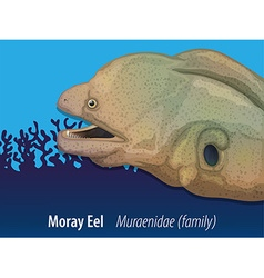 Moray eel swimming in the sea vector image