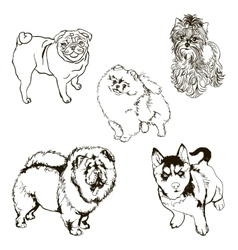 set of dog breeds silhouettes vector image