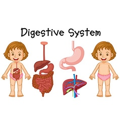 Girl and digestive system diagram vector image