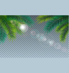 summer with tropical palm vector image