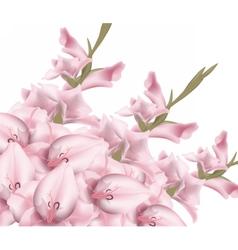 Sword lily gladiolus vector image
