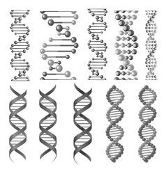 symbols dna helix or molecular chain vector image