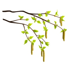 Spring birch tree branches isolated vector image vector image