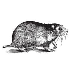 Hamster vintage vector