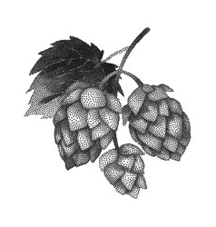 Hop branch in stippling technique vector