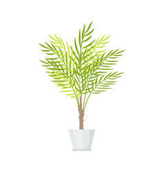 indoor plant with big leaves in white plastic pot vector image