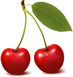 Two red cherry berries with leaf vector