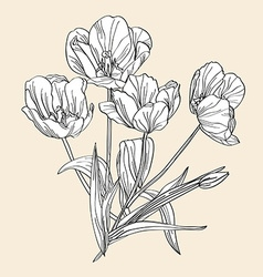 hand drawn decorative tulips vector image