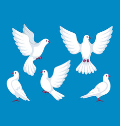 Set of five white doves beautiful pigeons faith vector