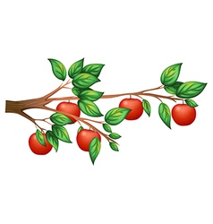 An apple tree vector