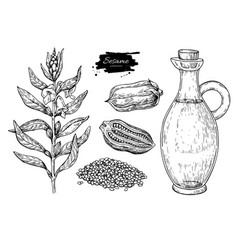 Bottle of sesame oil with plant and seed vector