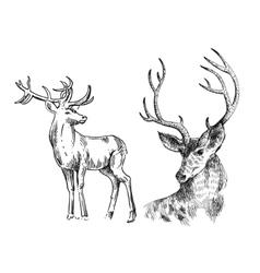 hand drawn sketch deer vector image