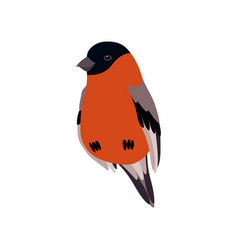 Little bullfinch bird cute birdie home pet vector