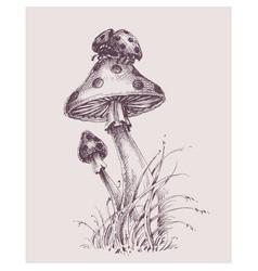 nature scene ladybug on top a mushroom vector image