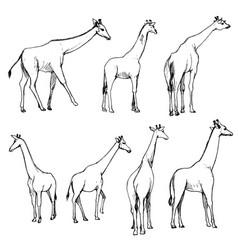 set giraffes vector image