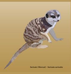 suricat vector image