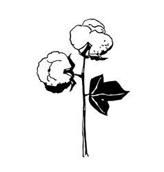 hand drawn cotton branch in vintage style vector image