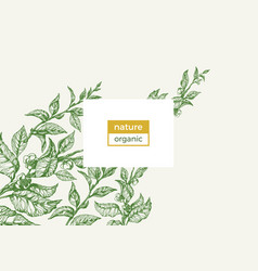 template nature green branch vector image