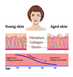 Faces and two types of skin - aged and vector