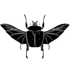 Goliathus albosignatus beetle vector
