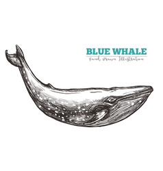 hand drawn blue whale vector image