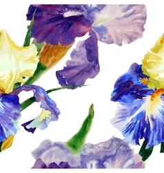 Seamless pattern with color irises1-04 vector image