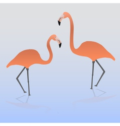 two flamingos on the water eps10 vector image vector image