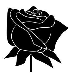 black rose on white background vector image