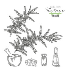 Hand drawn tea tree branches with flowers vector