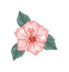 beautiful design of hibiscus with green leaves vector image