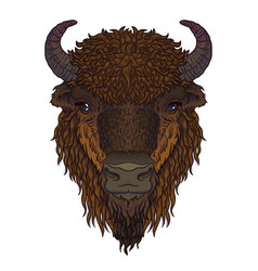European brown zubr buffalo bison animal isolated vector