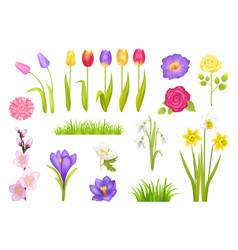Flowers collection poster vector